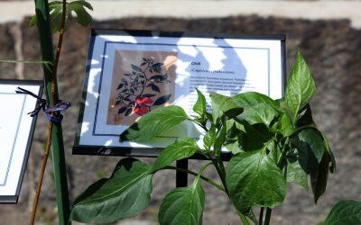 Kalle Hamm ja Dzamil Kamanger: Paperittomien puutarha